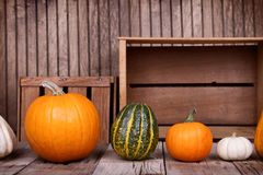 Assorted pumpkins and gourds Stock Photography