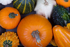 Assorted pumpkins and gourds Royalty Free Stock Images