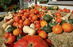 Assorted Pumpkins Stock Photography