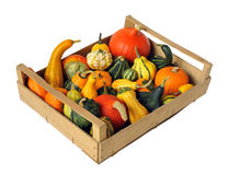 Assorted pumpkins and squashes Stock Image