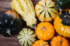 Assorted pumpkins and squashes Royalty Free Stock Photography