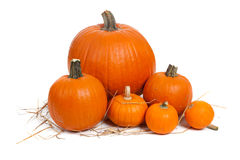 Assorted pumpkins with straw on white Royalty Free Stock Images