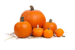 Assorted pumpkins with straw on white Stock Photography