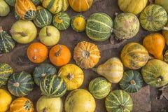 Assorted pumpkins Stock Images