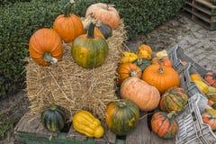 Assorted pumpkins Stock Image