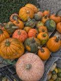 Assorted pumpkins Stock Photography