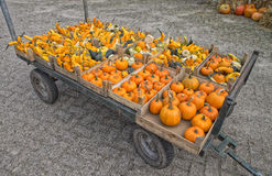 Assorted pumpkins Royalty Free Stock Image