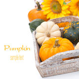 Assorted pumpkins in a wooden tray, isolated on white Royalty Free Stock Photography