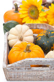 Assorted pumpkins in a wooden tray and yellow flowers, isolated. On white background Royalty Free Stock Images