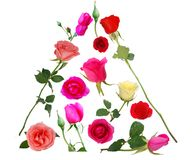 assorted pyramid roses Royalty Free Stock Images