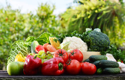 Assorted raw organic vegetables in the garden Royalty Free Stock Images