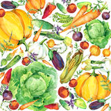 Assorted raw organic vegetables. watercolor illustration. watercolor vegetables and herbs background Royalty Free Stock Photography