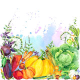 Assorted raw organic vegetables. watercolor illustration. watercolor vegetables and herbs background Stock Photos