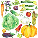 Assorted raw organic vegetables. watercolor illustration. watercolor vegetables and herbs background Stock Photography