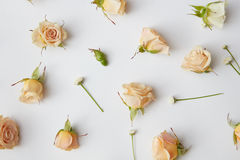 Assorted roses heads. Royalty Free Stock Photography