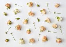 Assorted roses heads. Stock Images