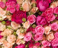 Assorted roses Royalty Free Stock Photo