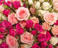 Assorted roses Stock Photography