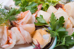 Assorted sea scallops, crab, mussels, tiger shrimp. Stock Photo