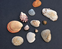 Assorted sea shells Royalty Free Stock Photography