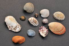 Assorted sea shells Royalty Free Stock Photos