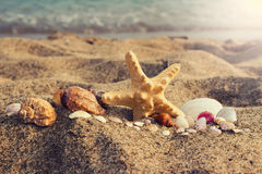 Assorted sea shells and starfish on an south ocean coast with sa Stock Photography