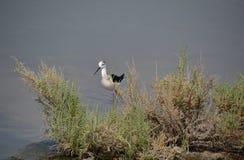 Assorted seabirds on Dubai Creek Royalty Free Stock Images