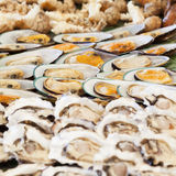 Assorted seafood Stock Images