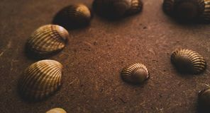 Assorted Seashell on Sand royalty free stock image