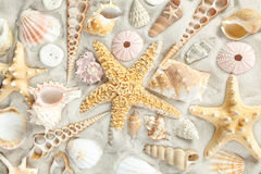 Assorted seashells. On a sandy beach filling the frame royalty free stock photography