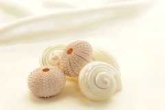 Assorted seashells Royalty Free Stock Photography