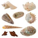 Assorted Seashells Stock Photo