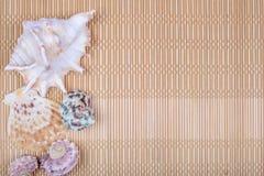 Assorted seashells on bamboo background Royalty Free Stock Photos