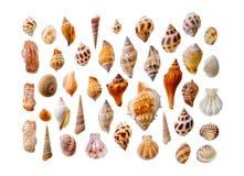 Assorted seashells Royalty Free Stock Photography