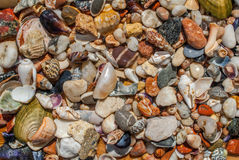Assorted seashells and pebbles background Royalty Free Stock Photography