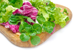 Assorted several kinds of fresh salad (corn, radicchio, lettuce) Royalty Free Stock Photo