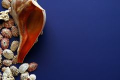 Assorted Shells on edge of page. Covering half the page leaving lots of room for text or images , blue background Royalty Free Stock Image