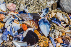 Assorted Shells Royalty Free Stock Images