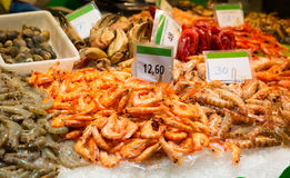 Assorted shrimps Stock Images