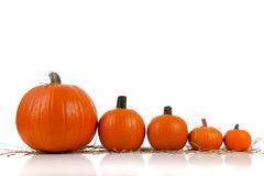 Assorted sizes of pumpkins on hay on white Stock Photos