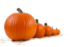 Assorted sizes of pumpkins on hay on white Royalty Free Stock Photo