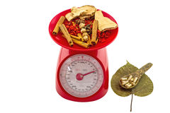 Assorted spices for China Pharmaceutical Equipment in red weight scale , pill in wooden spoon on dry Sacred fig leaf Royalty Free Stock Photo
