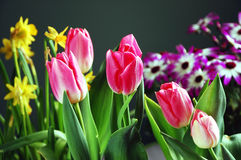 Assorted spring flowers. Colorful assorted spring flowers on green background Royalty Free Stock Photos