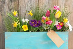 Spring flowers with gift label Royalty Free Stock Photos