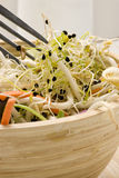 Assorted sprouts salad. Stock Images