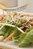 Assorted sprouts salad. Stock Photography