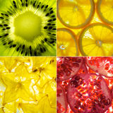 Assorted square collage of 4 back lit fruit slices Royalty Free Stock Image