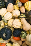 Assorted squash Royalty Free Stock Photo