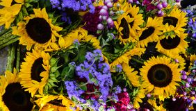 Assorted Sunflower Floral Decoration Background royalty free stock photo
