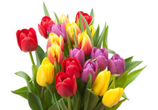Assorted Tulips Bouquet. Isolated On White Background Royalty Free Stock Photography